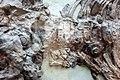 Hul - Temnodontosaurus platyodon - 6.jpg