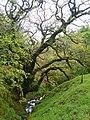 In Swinburn's Park - geograph.org.uk - 1307214.jpg