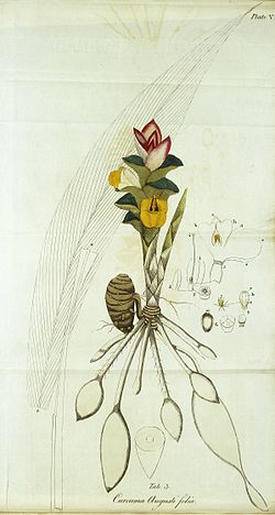 Indian Medicinal Plants and Drugs Wellcome L0032802.jpg
