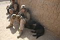 Infantrymen engage Taliban insurgents during 4th of July weekend 140704-M-OM885-107.jpg