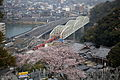 Inuyama Bridge and Sakura.JPG