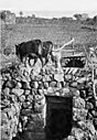 Irigation system palestine 1913.jpg