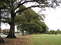 Islington Park MaitlandRd.jpg