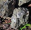 Ison Creek Kimberlite (Elliott County Peridotite, Late Cretaceous, 75 Ma; west of Stephens, Elliott County, Kentucky, USA) 17 (48383216377).jpg