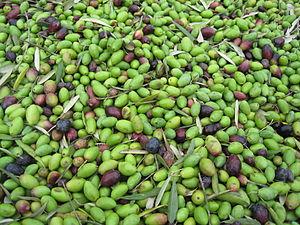 English: Italian olives