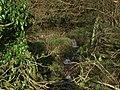 Ivy near triple waterdrops on rivulet near Stick Bridge - geograph.org.uk - 1075248.jpg