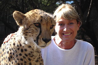 Jan Leeming - Jan Leeming with a three-year-old cheetah in Oudtshoorn, Western Cape, South Africa