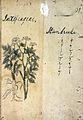 Japanese Herbal, 17th century Wellcome L0030115.jpg