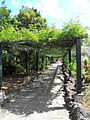 Jardín canario 61.JPG