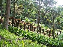 Jardin Balata 1.JPG