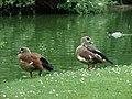Jardin Public, Bordeaux, Aquitaine, France - panoramio (3).jpg