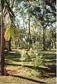 Jardin de Pamplemousses (3002656628).jpg