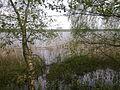 Jezioro Urszulewskie - panoramio.jpg