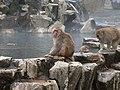 Jigokudani YaenKouen (Monky park) , 地獄谷 野猿公苑 - panoramio (18).jpg