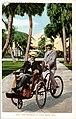Joe Jefferson at Palm Beach, Florida (NBY 429501).jpg