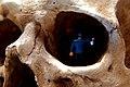 Journey Into Skull Cave (4219886971).jpg