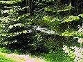 June Grüne Hölle Bergwälder Glottertal Quellbäche - Mythos Black Forest Photography 2013 green mountain forest The Glotter creek - panoramio.jpg