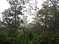 Jungle View (3872586021).jpg