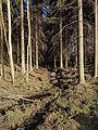 Jyväskylä - stream2.jpg