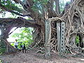 Kam Tin Tree House - 2007-09-30 14h03m30s SN200804.jpg
