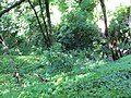 Kaniv Nature Reserve (May 2018) 07.jpg
