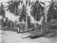 Kanoter vid stranden. Sulawesi. Indonesien - SMVK - 000294.tif
