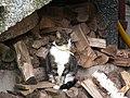 Katter (6062412830).jpg