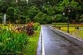 Kebun Raya Bogor 15.jpg