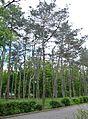 Kherson Arboretum of State Agrarian University 05 (YDS 0088).jpg