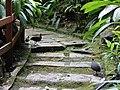 Kinabalu Park, Ranau, Sabah, Malaysia - panoramio (22).jpg