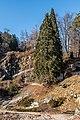 Klagenfurt Villacher Vorstadt Botanischer Garten Sequoiadendron giganteum 29012018 2509.jpg