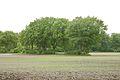 Kreis Pinneberg, Naturschutzgebiet Liether Kalkgrube 16.jpg