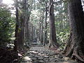 Kumano Kodo pilgrimage route Daimon-zaka World heritage 熊野古道 大門坂03.JPG