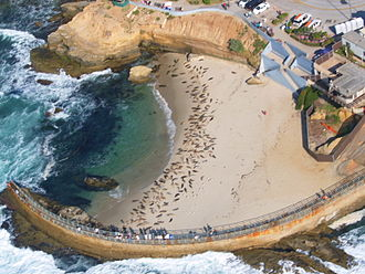 Children's Pool Beach - Aerial view of the pool, May 2011, with over 200 seals on the beach