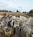 La Grande Traversée de la Forêt du Pays de Chimay (DSC 0594) Fondry des Chiens in Viroinval, Belgium.jpg