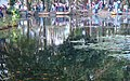 Lago Jardin Botanico - panoramio.jpg