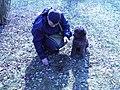 Lagotto Romagnolo à la recherche de truffes (3).jpg