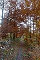 Landschaftsschutzgebiet Hoppecke-Diemel-Bergland-Typ A - Wanderwege (7).jpg