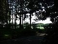 Landschaftsschutzgebiet Waldgebiet bei Neuenkirchen Melle, kurz vor Straßenende - Datei 3.jpg