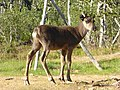 Lapland - Urho Kekkonen National Park - 20180728172813.jpg