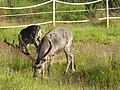 Lapland - Urho Kekkonen National Park - 20180728173245.jpg