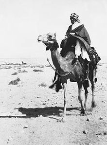 Black and white photo of a man on a camel