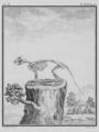 Le Ecureuil, Squelette - Squirrel, Skeleton - Gallica - ark 12148-btv1b2300254t-f37.png