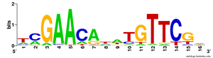 Sequence motif - A DNA sequence motif represented as a sequence logo for the LexA-binding motif.