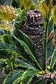 Liliʻuokalani Park and Gardens (a0005157) - panoramio.jpg