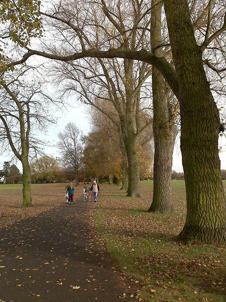 File:Line of Poplars - geograph.org.uk - 1565396.jpg