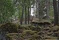 Linnés Hammarby - KMB - 16001000546976.jpg