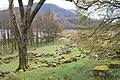 Llanycil - Woodland by Llyn Celyn with Arenig Fawr - geograph.org.uk - 1612340.jpg