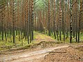 Logging railway Tomsk IMG 1671.jpg