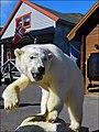 Longyearbyen - abitante reso inoffensivo - panoramio.jpg